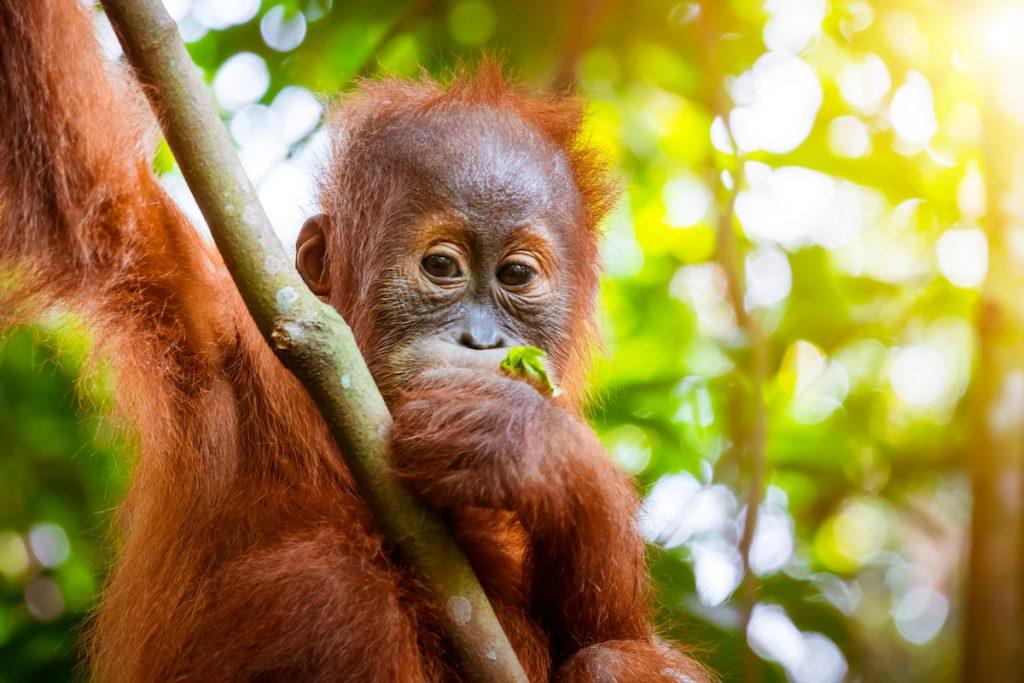 Hot mot biologisk mångfald